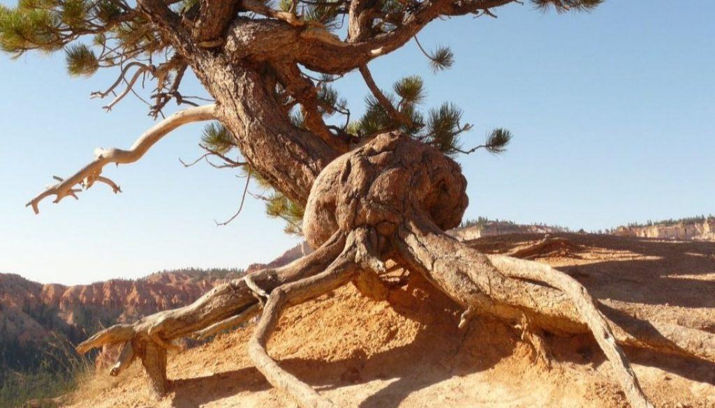 tree-nature-rock-plant-4